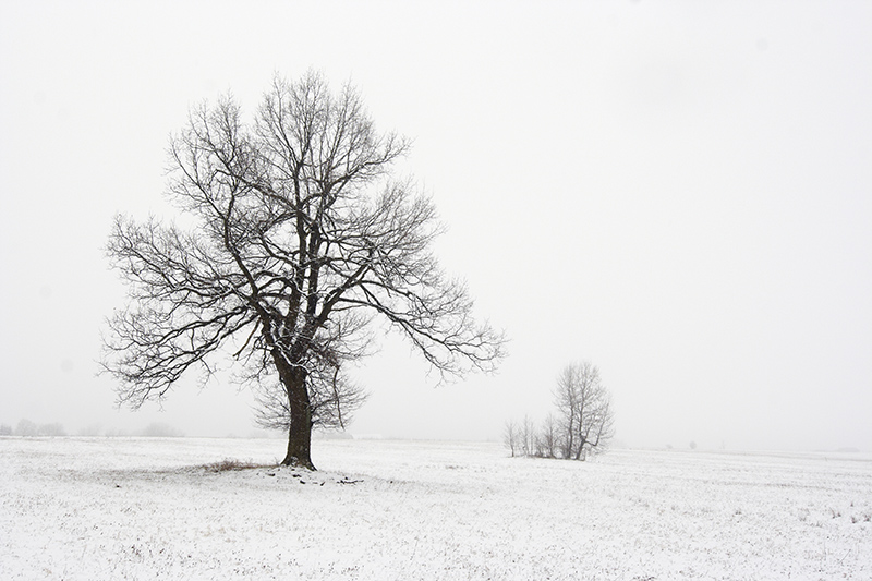 Shot of a solitary tree in snowy landscape