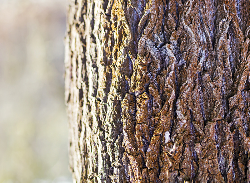 Tree trunk close-up in the forest