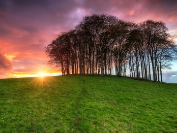 A beautiful fiery sunset over a beech tree copse on a hill
