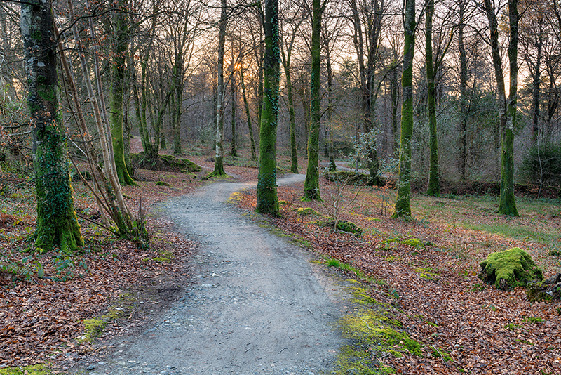 A winding path through beech woodland